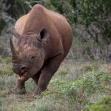 Addo Black Rhino Charge