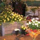 Addo Rose and Garden show (960 x 600)