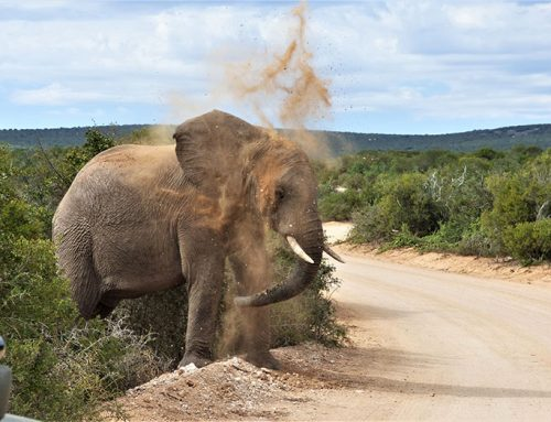 Addo Park Game Drive