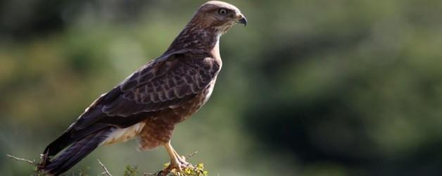 Addo Bird Watching