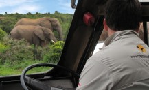 Addo Tours & Safari's