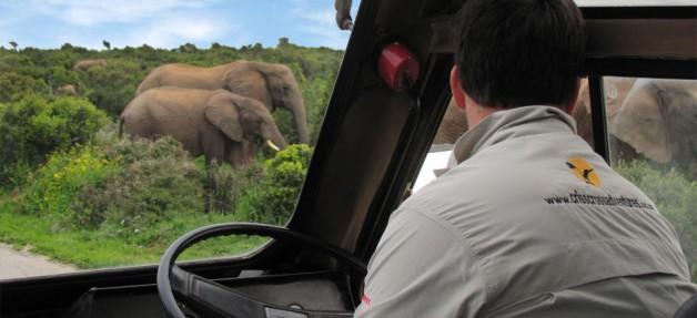 Addo Tours & Safari's